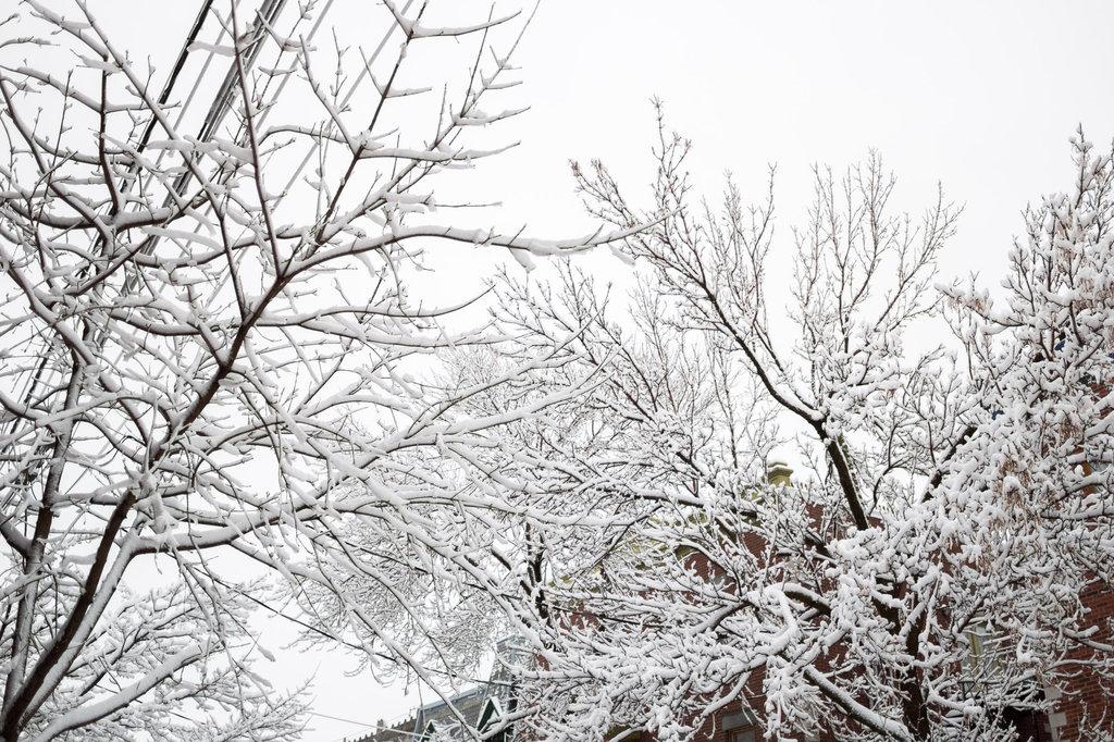neige-du-28-fevrier-3.jpg