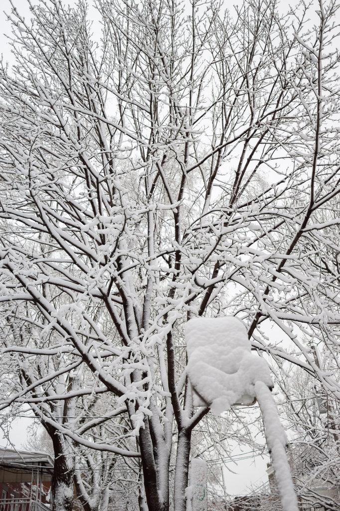neige-du-28-fevrier-9.jpg
