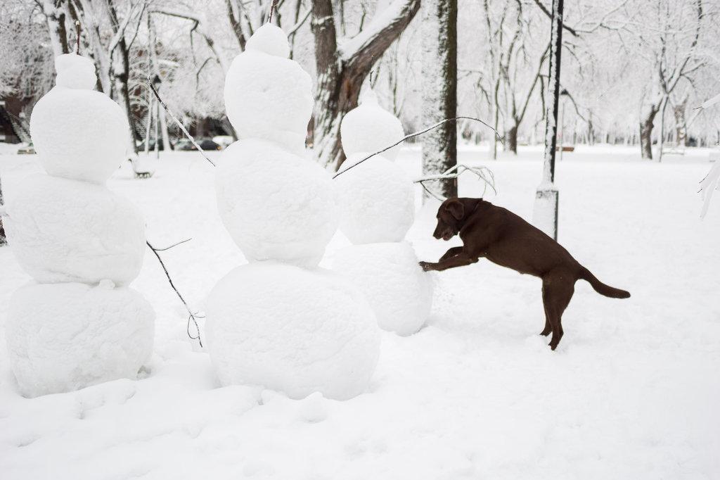 neige-du-28-fevrier-13.jpg